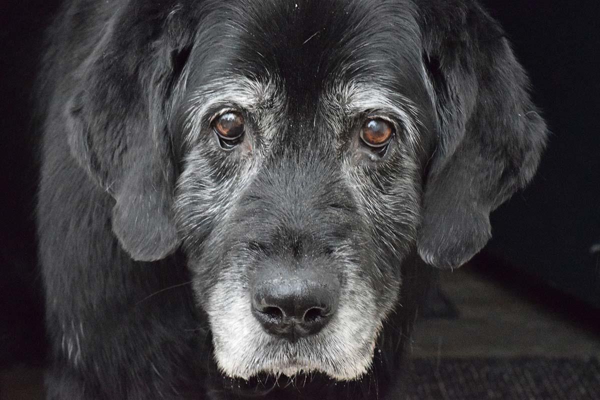 Resultado de imagen para perros viejitos