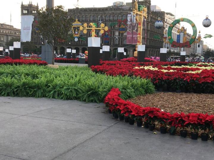 Resultado de imagen para Inaugura Sheinbaum jardín de nochebuenas en el Zócalo