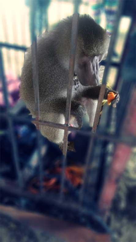 Trafico Animales Rentable Drogas Trata Millonarias Ganancias, Trafico Animales Rentable Drogas, Trafico Animales Millonarias Ganancias, Trafico Animales Trata, Rentable Como Drogas, Millonarias Ganancias, Animales, Viajar, Paqueteria, Narcotrafico, Trata, Excelsior, Noticias, Mexico, Delito, Narcotrafico, Narco,  Tratantes, Blancas