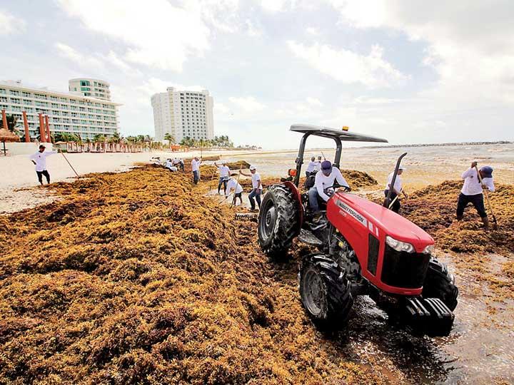 ¿Qué es el sargazo y por qué se acumula en las playas?