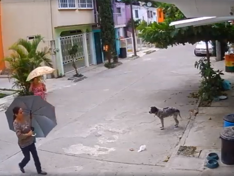 Se-roba-los-platos-de-un-perro-y-las-redes-la-llaman-#LadyTrastes