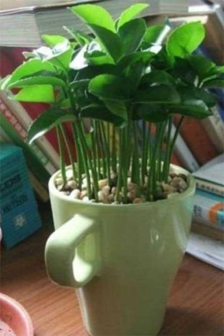 estilo, vida, como decorar, aprende, consejos, tips, plantar, limones, taza, aroma, excelsior, noticias, mexico