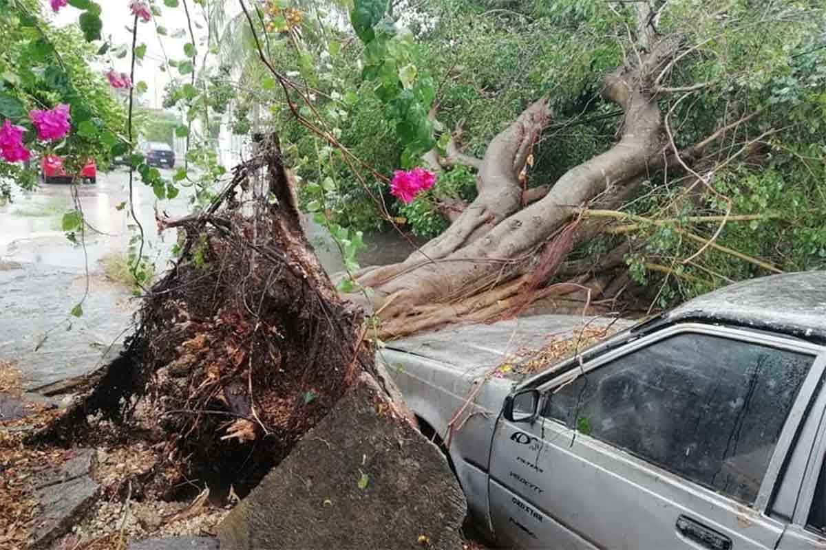 En la ciudad de Mérida y otras poblaciones se reportaron caída de árboles, espectaculares y viviendas dañadas