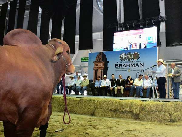 El gobernador de Tamaulipas, Francisco García Cabeza de Vaca, durante la Subasta Elite de Brahman. Imagen tomada de Twitter: @RuralTam_mx
