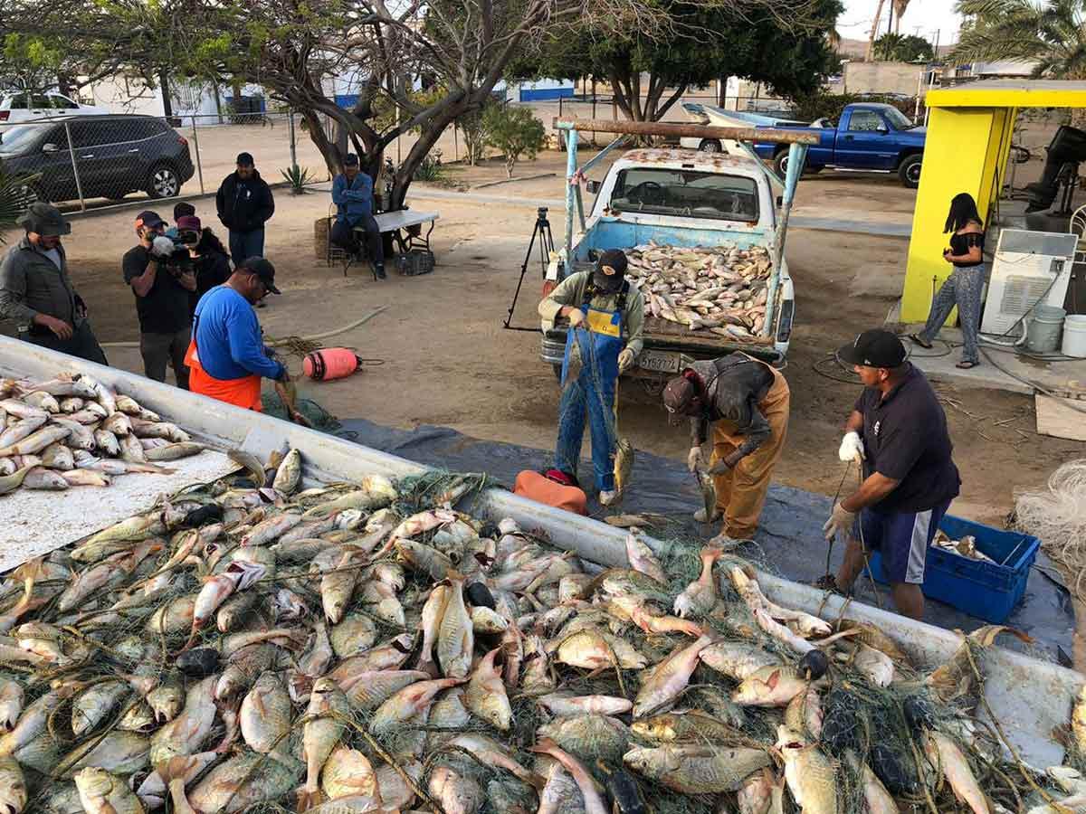 Pescadores cumplen amenaza y regresan a hábitat de vaquita marina