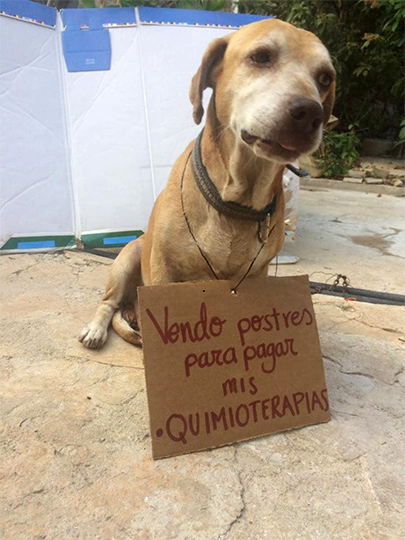 'Deko', el perrito que vende postres para pagar su quimioterapia