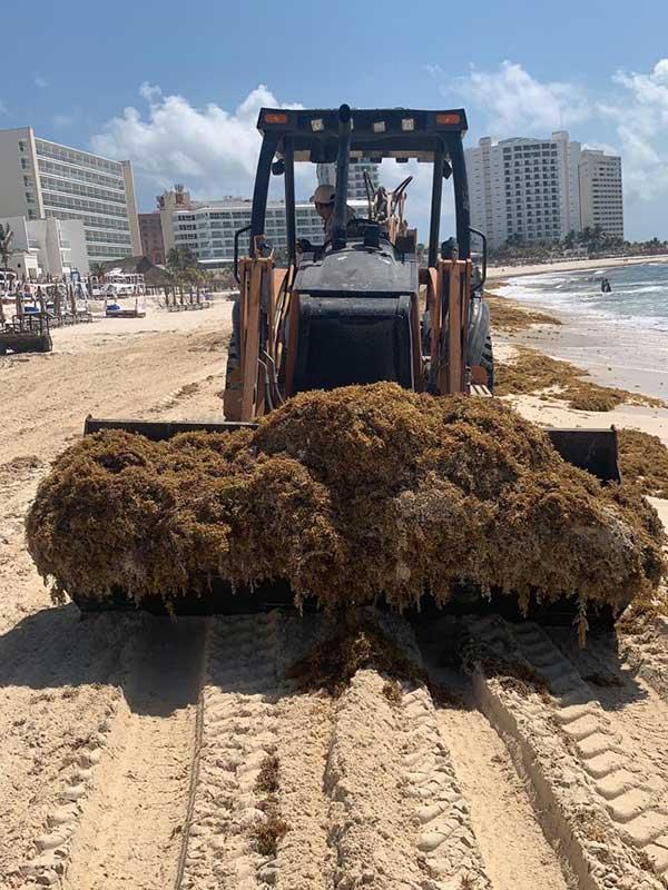 Con maquinaraia pesada se retiró sargazo de la Playa Gaviota Azul, en Cancún, Quintana Roo. Foto: Especial