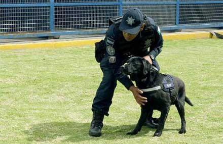 Unidad Canina de la PF conservará sus derechos en transición a Guardia Nacional