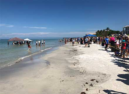 Turistas liberan ballenas varadas en playa de Florida