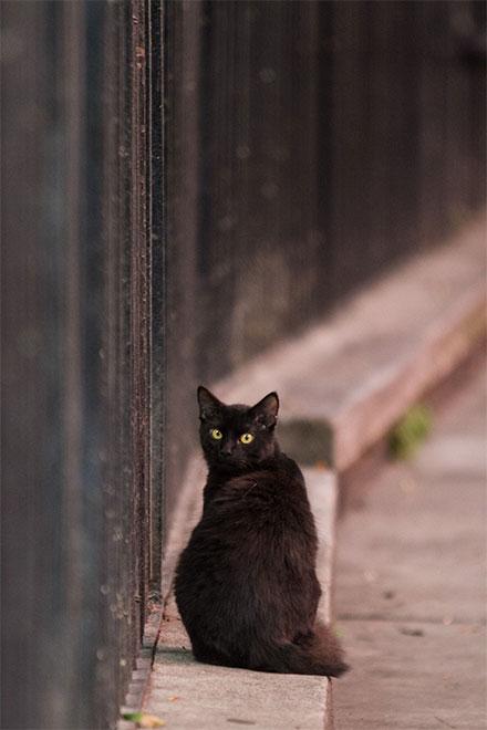 Gato negro en la calle, sobre la banqueta, sentado voltea a la cámara.