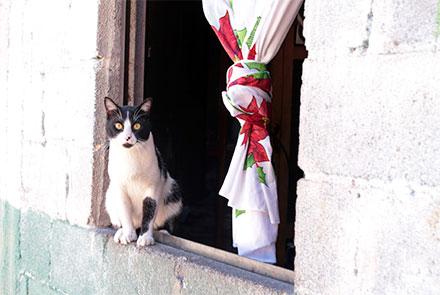 Gato en el filo de una ventana abierta