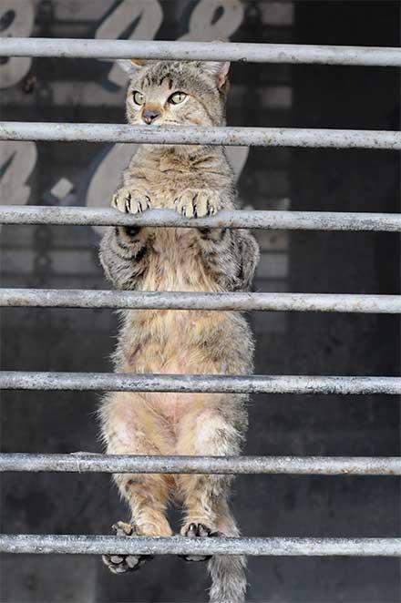 Gatito se asoma porla ventana de un negocio.