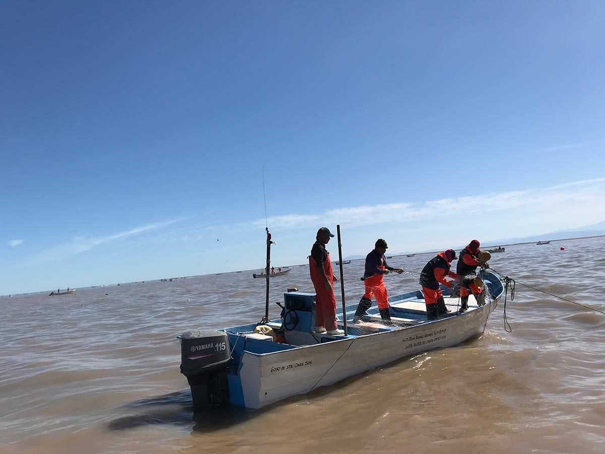 Las comunidades y cooperativas pesqueras afirman que no les dejaron otra alternativa