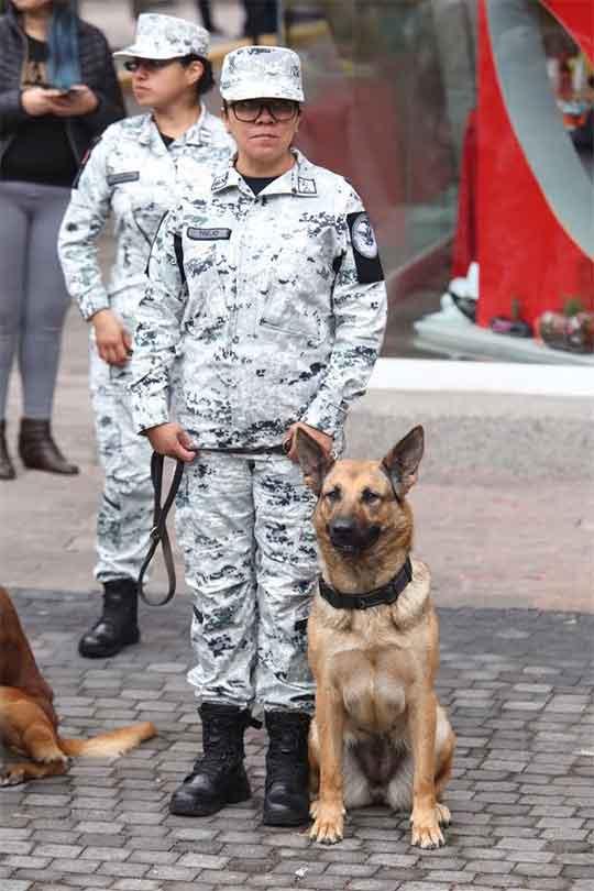 Mujeres del ejército mexicano posan al lado de perros donados por EU para el combate al crimen organizado