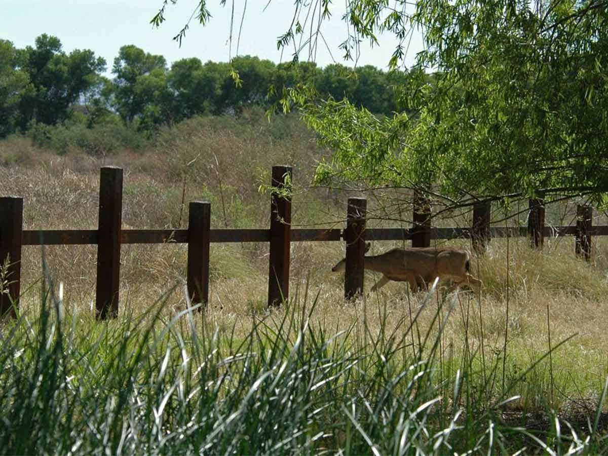 Por muro de Trump muere primer ejemplar de fauna protegida