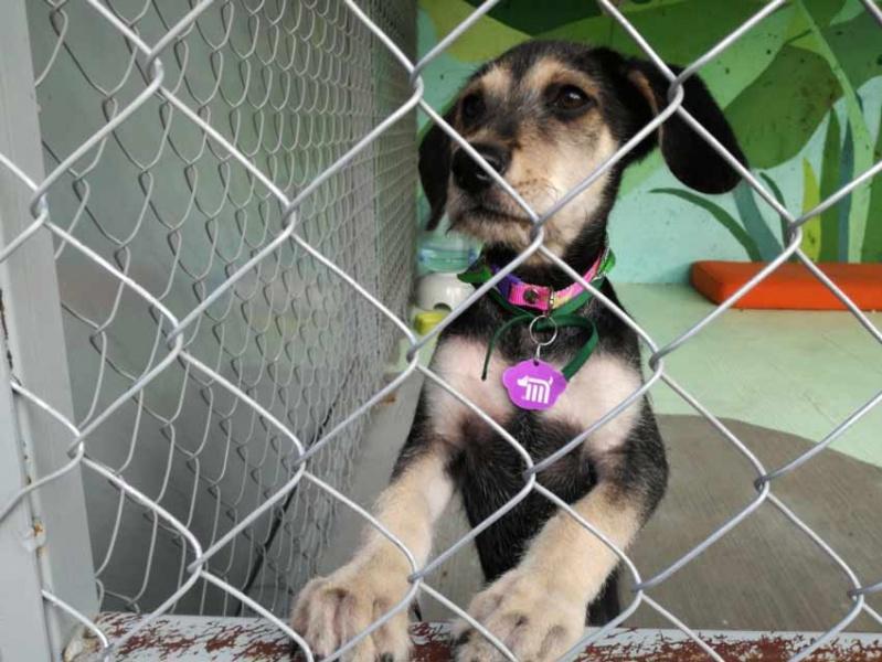 Dan atención y albergue a perros encontrados dentro del Metro, en CDMX