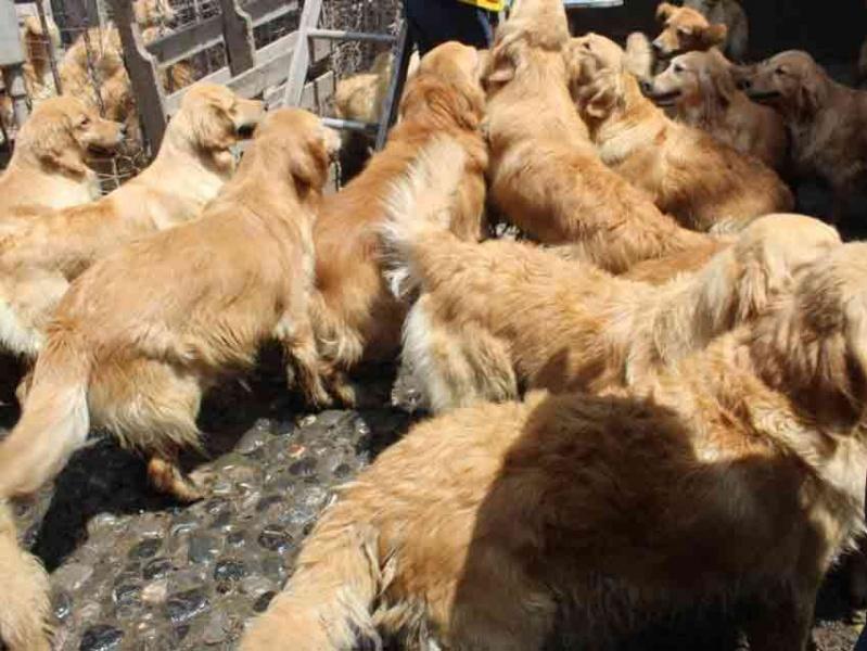 Rescatan 30 perros de criadero en Iztapalapa