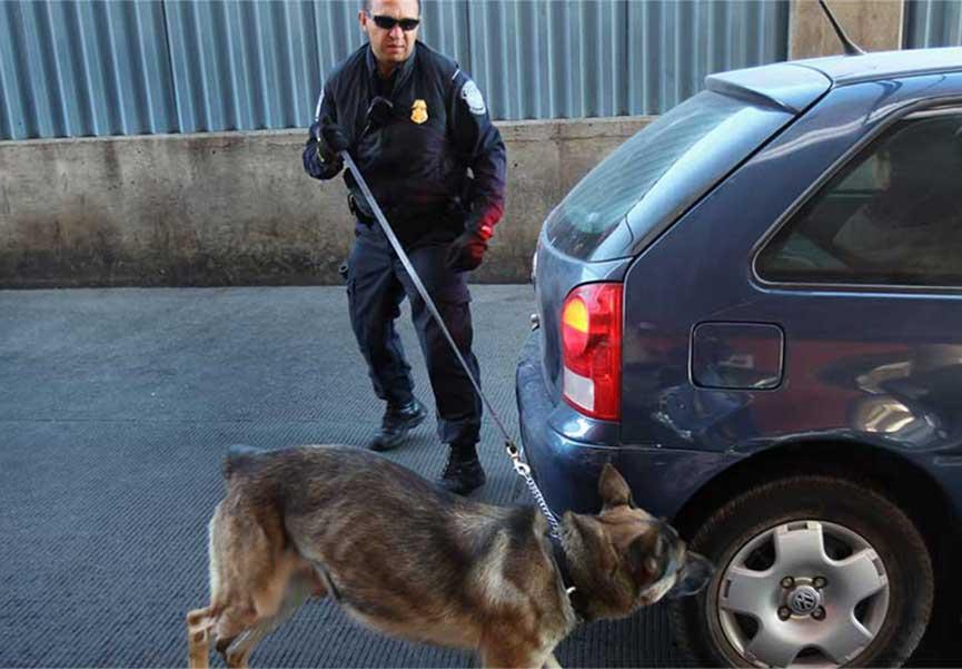 Estados Unidos entrega 25 caninos detectores a autoridades mexicanas