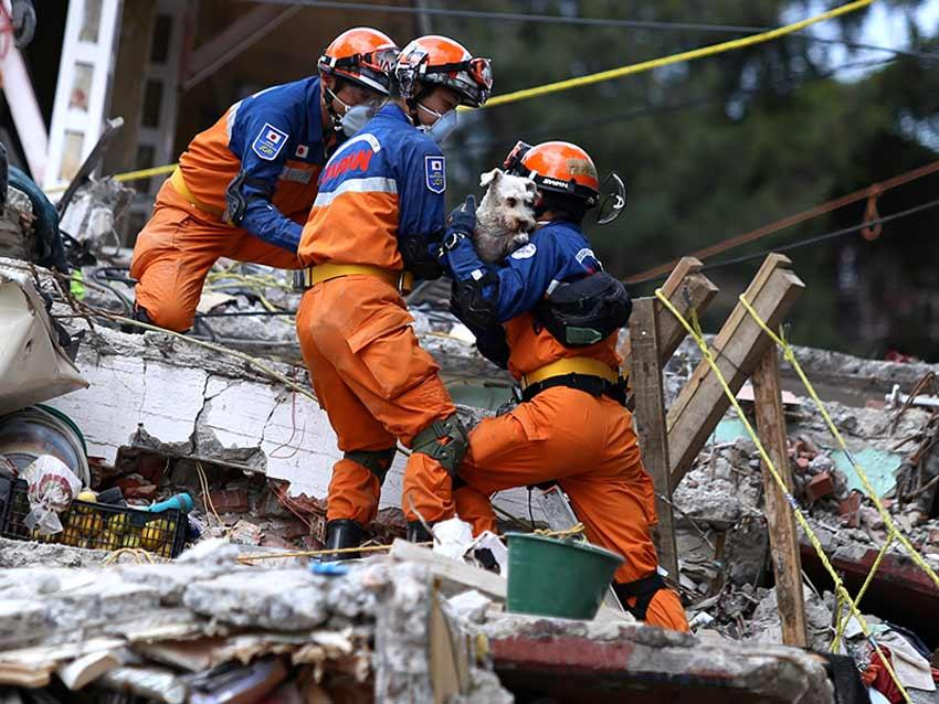 Rescatan a schnauzer en Multifamiliar de Tlalpan; vecinos se amparan