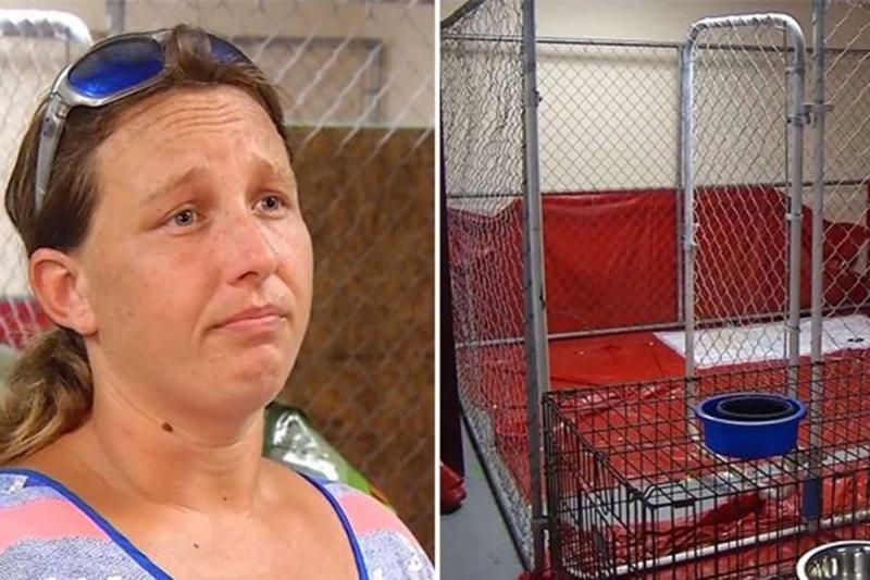 Arrestan a mujer por salvar animales tras huracán 'Florence'