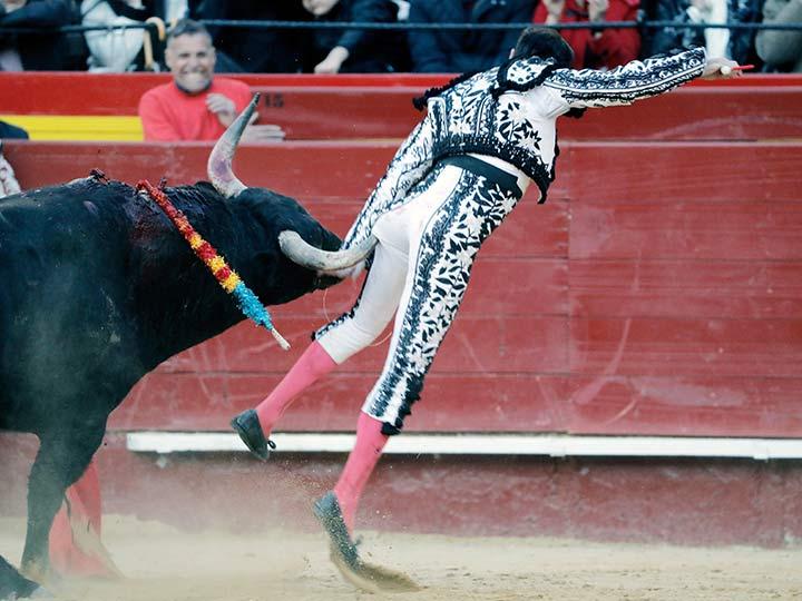 Heroico toro cornea a malvado torero 2116798