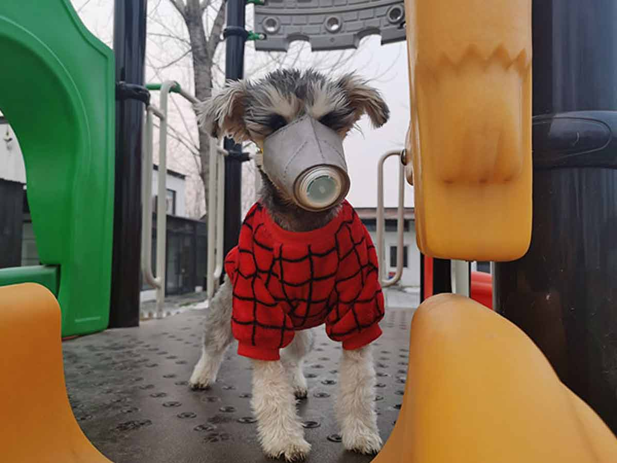 Incrementa venta de máscaras para perros por coronavirus en China