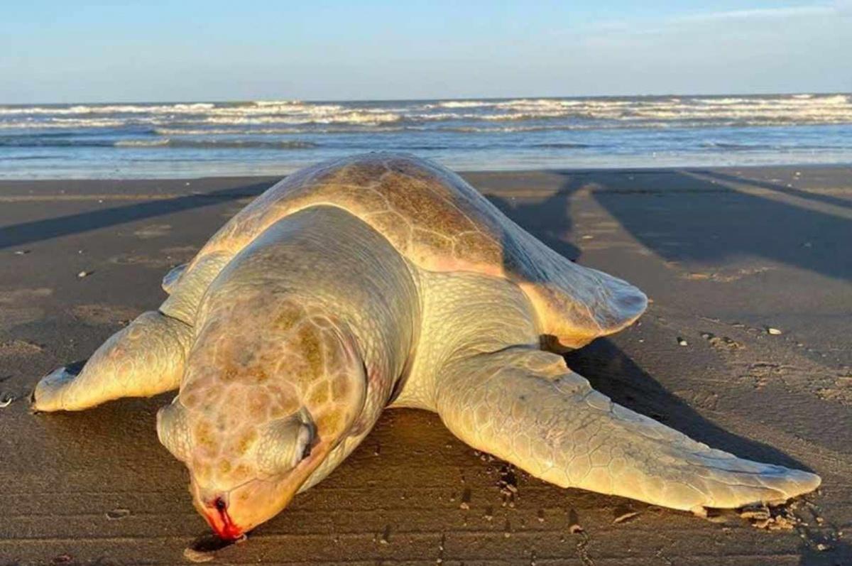 delfines muertos y también tortugas