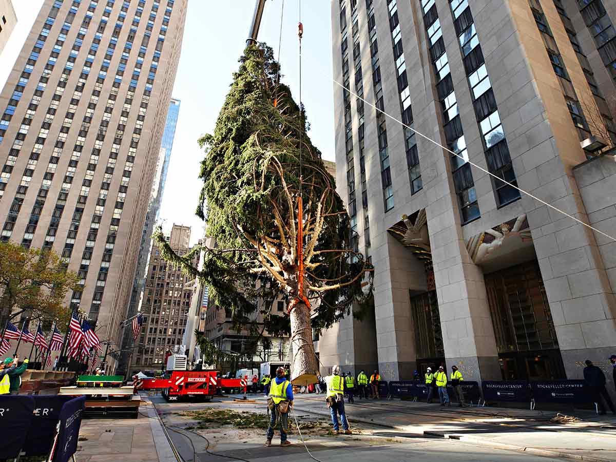 El árbol fue donado por Al Dick de Daddy Al's General Store en Oneonta, en el centro de Nueva York. Foto: AP