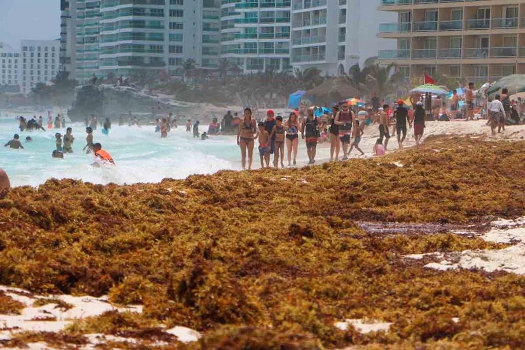 Arribo masivo de sargazo cubre costas de Quintana Roo