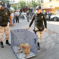 Aumentan al doble quejas por maltrato animal - Excélsior