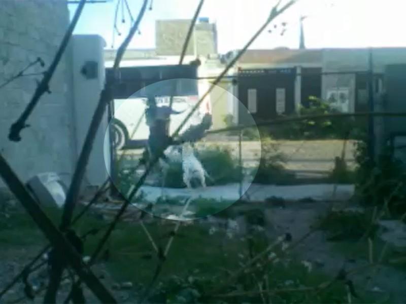 Graban momento en que perro pitbull ataca a niño en la calle