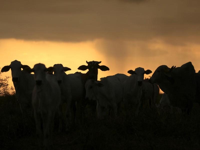 Detectan en Brasil dos casos de 'enfermedad de las vacas locas'