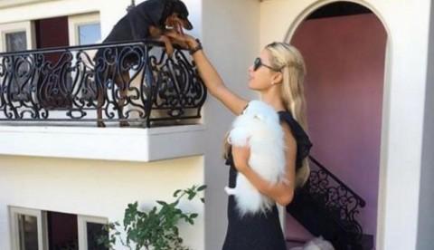 Mansión de las mascotas de Paris Hilton (Imagen vía Instagram)