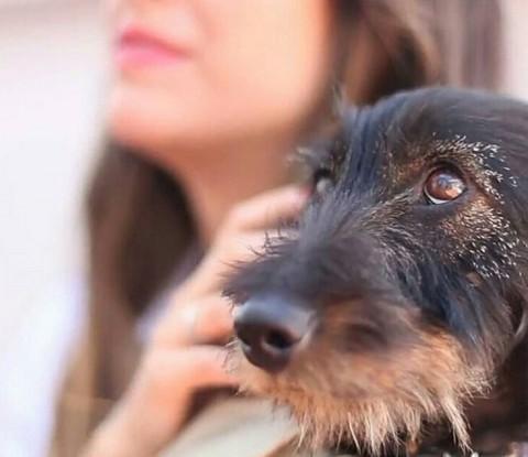 """Blanca Suárez y """"Pistacho"""", un teckel, que le robó el corazón (Foto: Instagram)"""