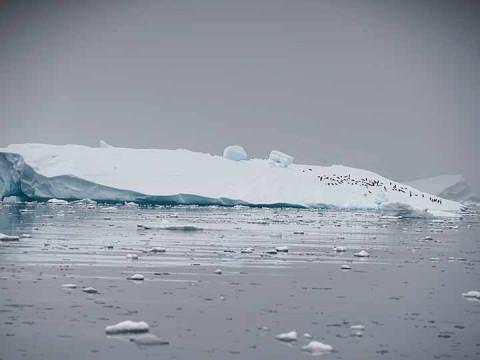 Entre 1992 y 2011, la Antártida perdió casi 84 mil millones de toneladas (Foto: Reuters)