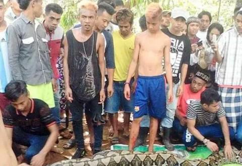 Serpiente pitón devora a mujer en Indonesia