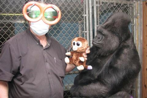 Koko nació en el Zoológico de San Francisco (Foto: Gorilla Foundation)