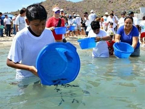 Semarnat, Conapesca, Liberacion, Totoaba, Peligro de Extinción, Mar de Cortés, California, La Paz, Medio Ambiente