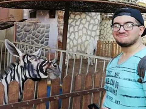 Esta es la selfie que se tomó Mahmoud A. Sarhan con el burro puntado de cebra (Foto: Facebook/ Mahmoud Sarhan)
