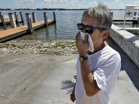 Marea roja deja más peces muertos a su paso (Foto: AP)