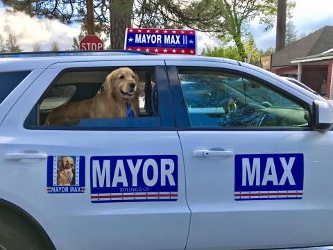 Perrito es el nuevo alcalde de una pequeña localidad de California