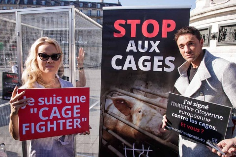 """La campaña """"Por una nueva era sin jaulas"""" denuncia que 370 millones de animales en Europa, 90 millones de ellos en Francia, son criados en jaulas. Foto: EFE"""