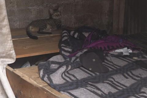 Un gato también fue abandonado en el predio donde vivían los tzotziles. Foto: José de Jesús Cortés/ Corresponsal