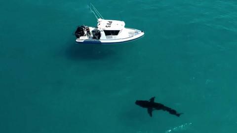 Muere un hombre por ataque de tiburón en islas turísticas de Australia