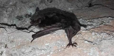 Crean la 'batiseñal' de tránsito... para no chocar con murciélagos