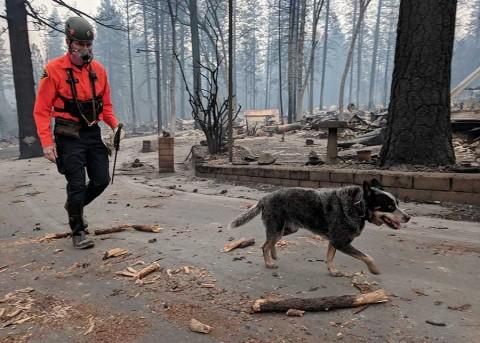 Los incendios en California dejan Paradise como