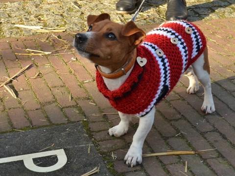 Los perros de razas pequeñas y medianas de pelo corto les viene bien un abrigo, particularmente cuando se encuentran fuera de casa. Foto: PIxabay