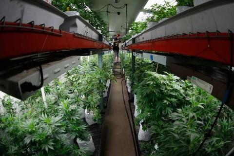 Quieren legalizar los hongos alucinógenos en Estados Unidos