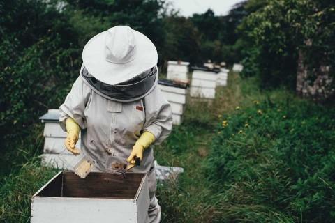 Envenenan a más de 2 millones de abejas en Colombia