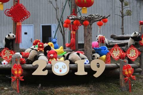 Así celebra China la llegada del Año del Cerdo